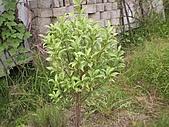 香草姐的快樂花園(過去式):2010070702.jpg