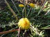 香草姐的快樂花園(現在式):花園裡幾位春天的花神都出現囉