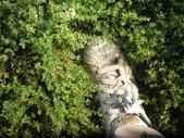 香草姐的快樂花園(現在式):這片鋪地香則是撐最久的百里香