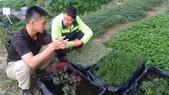 香草姐的快樂花園(現在式):不常有時間過來