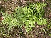 香草姐的快樂花園(過去式):2010012702.jpg