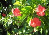 香草姐的快樂花園(現在式):不知不覺,在南屯耕種已經進入第三年。
