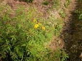 香草姐的快樂花園(過去式):2010030401.jpg