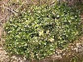 香草姐的快樂花園(過去式):2010031505.jpg