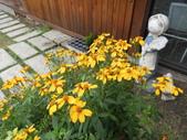 香草姐的快樂花園(現在式):既然是花園