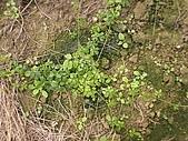香草姐的快樂花園(過去式):2010012703.jpg