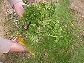 香草姐的快樂花園(過去式):2010012102.jpg