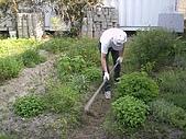 香草姐的快樂花園(過去式):2010052101.jpg