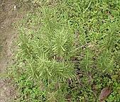 香草姐的快樂花園(過去式):2010092401.jpg
