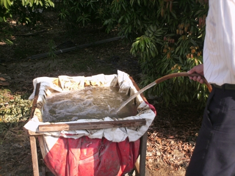 香草姐的快樂花園(過去式):2009121004.jpg