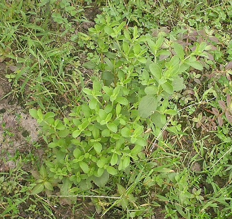香草姐的快樂花園(過去式):2010092402.jpg
