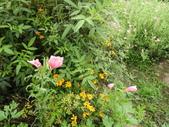 香草姐的快樂花園(現在式):這個月讓我非常驚豔的