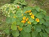 香草姐的快樂花園(過去式):2011021802.jpg