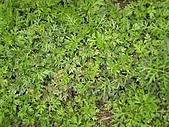 香草姐的快樂花園(過去式):2011021804.jpg