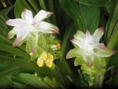 香草姐的快樂花園(現在式):夏季沒有亮麗的花