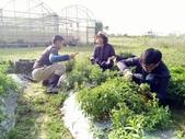 香草姐的快樂花園(現在式):香草們長得旺