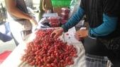 香草姐的快樂花園(現在式):青農們的小番茄也進入量產。