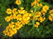 香草姐的快樂花園(現在式):好個忙碌又多感的十月。