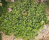 香草姐的快樂花園(過去式):2010050301.jpg