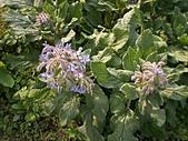 香草姐的快樂花園(過去式):2011030702.jpg