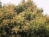 香草姐的快樂花園(過去式):2011041102.jpg