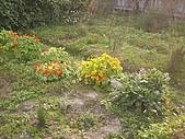香草姐的快樂花園(過去式):2011030703.jpg