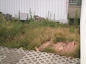 香草姐的快樂花園(過去式):2009120801.jpg