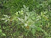 香草姐的快樂花園(過去式):2011030704.jpg