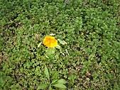 香草姐的快樂花園(過去式):2011030705.jpg