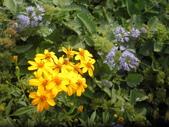 香草姐的快樂花園(現在式):我的花園當然也有花開