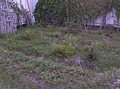 香草姐的快樂花園(過去式):2010072101.jpg