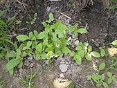 香草姐的快樂花園(過去式):2010050702.jpg