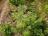 香草姐的快樂花園(過去式):2010050303.jpg