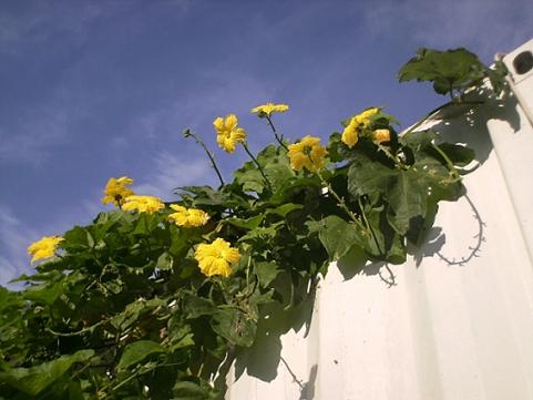 香草姐的快樂花園(過去式):2010090301.jpg