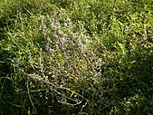 香草姐的快樂花園(過去式):2010090302.jpg