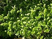 香草姐的快樂花園(過去式):2010090303.jpg
