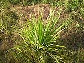 香草姐的快樂花園(過去式):2010091001