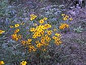 香草姐的快樂花園(過去式):2010122101.jpg