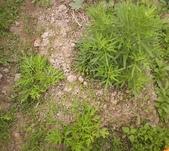 香草姐的快樂花園(過去式):2010031201.jpg