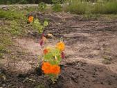 香草姐的快樂花園(過去式):2010031203.jpg