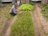 香草姐的快樂花園(過去式):2010031204.jpg