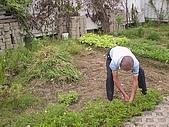 香草姐的快樂花園(過去式):2010060203.jpg