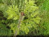 香草姐的快樂花園(現在式):綠咖哩也是讓我盼好久