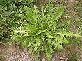 香草姐的快樂花園(過去式):2010060201.jpg