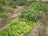 香草姐的快樂花園(過去式):2010041201.jpg