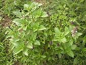 香草姐的快樂花園(過去式):2010060202.jpg