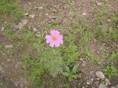 香草姐的快樂花園(過去式):2010020502.jpg