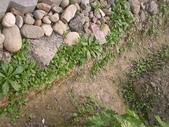 香草姐的快樂花園(過去式):2010020503.jpg