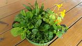 香草姐的快樂花園(現在式):b20171203-1.jpg