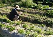 香草姐的快樂花園(現在式):這裡慢慢有東西可以拍了